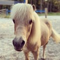 Apopka's Scotty Foundation horse sanctuary holding volunteer event this weekend