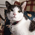 Unofficial Thornton Park mascot Lulu immortalized in new 12-month cat calendar