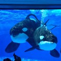 A Chinese company just bought 21 percent of SeaWorld stocks