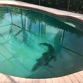 Always check before you jump in a Florida pool