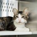 Gimme Shelter: Meet Ginger!