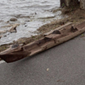Hurricane Irma washed up a nearly 400-year-old canoe in Florida