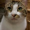Gimme Shelter: Meet Xena