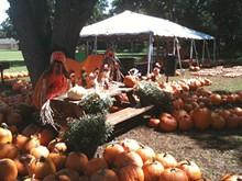 15700fa7_pumpkin-patch-2014-copy-700x525.jpg