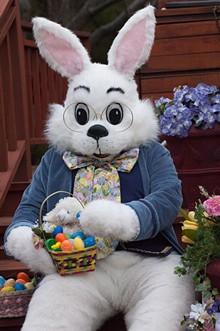 77210088_bunnybasket.jpg