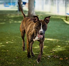 PHOTO BY PAWSITIVE PET PHOTOGRAPHY - Sadie has been in the shelter for over 100 days