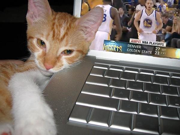 kitty-nba-playoffsjpg