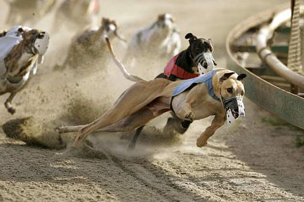 Daytona Dog Track >> Sanford Orlando Kennel Club Is The Third Deadliest Dog Track In