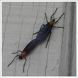 via thebrambleberrypatch.blogspot.com/2008/05/thursday-love-bugs.html