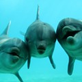Thank you, Internet: talking to dolphins and Taco Bell breakfasts