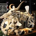 Cowasaki: A motorcycle made from animal bones