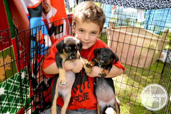 They call it Puppy Love: 62 sweet photos of dogs and their owners from our Puppy Love Festival - MELISSA BERRIOS