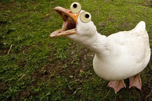 https://media2.fdncms.com/orlando/imager/wild-goose-chase-orlando/u/original/2324462/1668829.jpg