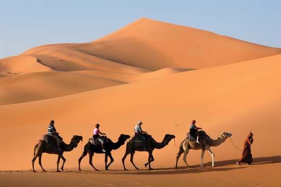 camel1jpg
