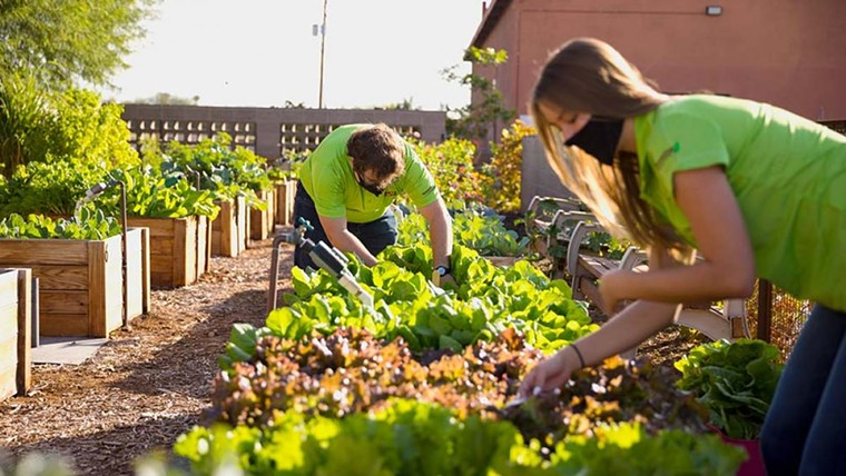 Get your plant fix at the ASU Polytechnic Campus. - ASU