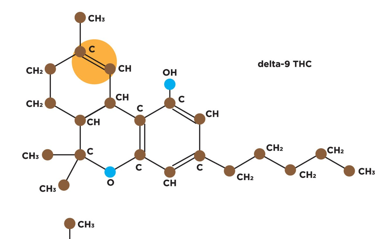 The Delta 8 THC molecule differs from Delta 9 due to the location of one double bond in its chain of carbon atoms (highlighted in orange).