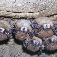 Broken Bats