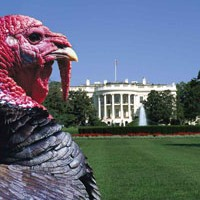 Big Turkey: A key player in Beltway politics