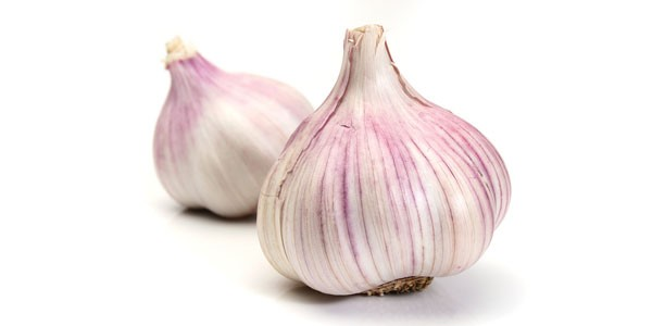 Enon Valley Garlic