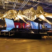 <i>Whales: Tohora</i> tells of whales -- and how New Zealand's people have viewed them over time.