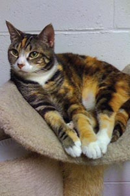 Heidi is one of the 240 Tiger Ranch cats up for adoption.