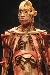 Inside man: One of the corpses in Bodies ... The Exhibition.