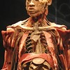 The Carnegie Science Center unveils <i>Bodies ... The Exhibition</i> ... but what are you seeing?