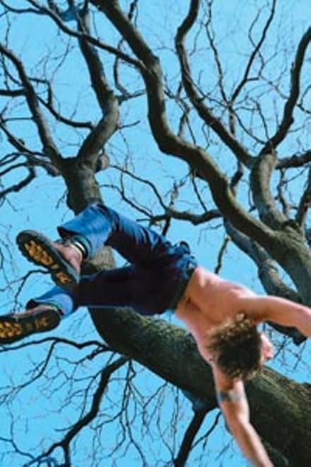 "It's fall: Kerry Skarbakka's ""Blue Tree"""
