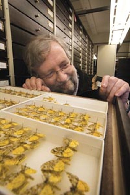 John Rawlins, with a drawer containing a handful of the 11 million bugs in the Carnegie's collection - HEATHER MULL