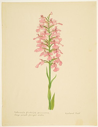 Native Pennsylvania, A Wildflower Walk, at the Hunt Institute for Botalical Documentation through June 29.