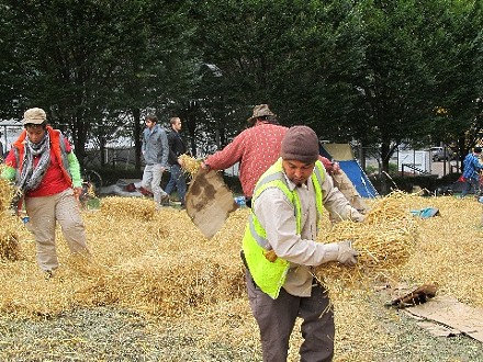Occupy Pittsburgh campers help put down straw to protect Mellon Green. - PHOTO BY CHRIS YOUNG