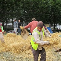 Occupy Pittsburgh campers help put down straw to protect Mellon Green.