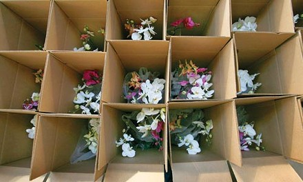 Orchids awaiting shipment - HEATHER MULL