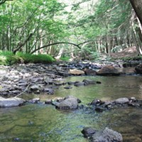 Page 6: This section of Branch Creek, in Allegheny National Forest, was good for watching synchronous fireflies in late June.