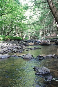Page 6: This section of Branch Creek, in Allegheny National Forest, was good for watching synchronous fireflies in late June. - PHOTOS BY BILL O'DRISCOLL