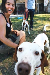 Pet cause: Volunteer Marie Teasdale at the Animal Rescue League - HEATHER MULL