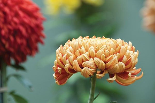 Phipps Conservatory and Botanical Gardens' Fall Flower Show