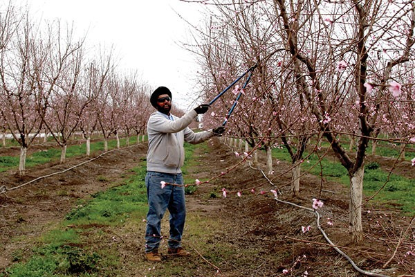 Photo of a peach farmer, by Hyla Willis, part of America's Least Livable City