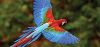 """Pittsburgh National Aviary's """"For the Birds"""""""