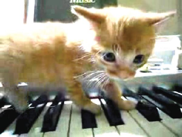 "Raising the kitty: YouTube cats are conscripted to perform Schoenberg in Cory Arcangel's ""Drei Klavierstucke op. 11."""