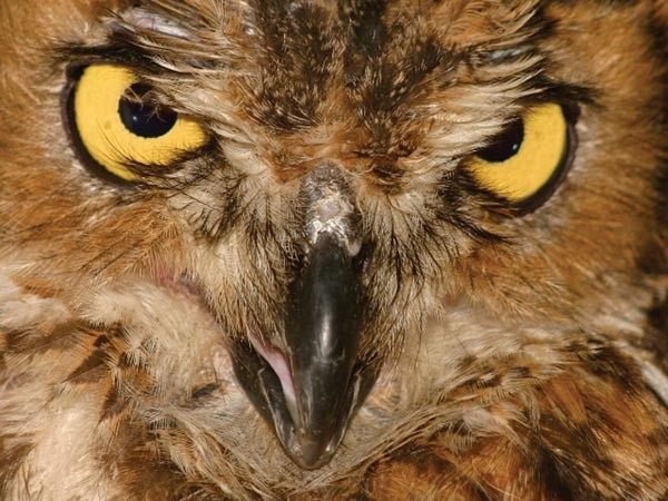sl_owl_01.jpg