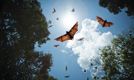 13_sl_bats.jpg