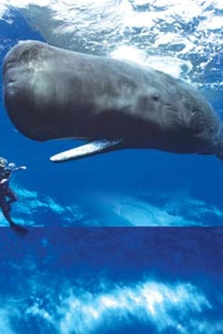 05_sl_whale.jpg