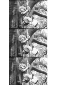 """Stills from Richmond's short film """"RopeSwing,"""" depicting children at play in a huge tree."""