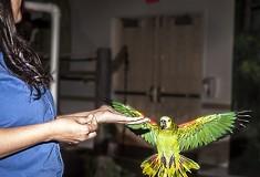 Beaks! Opens Tomorrow at the National Aviary
