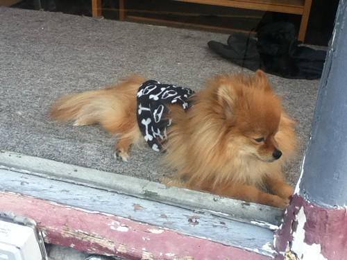 skulldog.JPG