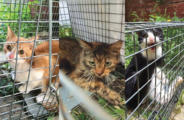 Three of the cats removed from a home in Mount Lebanon