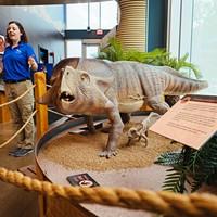 A model of a Protoceratops