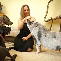 Heather Long with her pot-bellied pig and two rescue pit bulls
