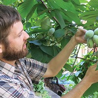 Local author Andy Moore writes the first book about the fruit called the pawpaw
